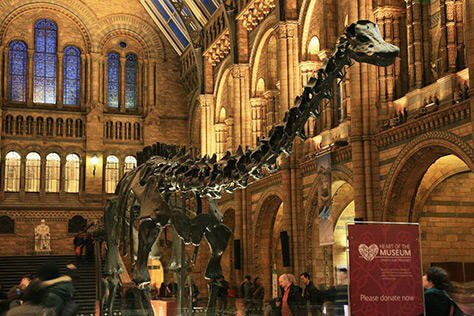 The Natural History Museum | Free Things to Do in London