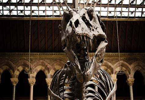 Oxford University Museum of Natural History on #daysoutwithkids