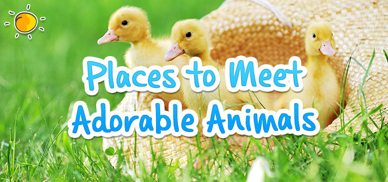 Places to meet adorable animals on #Daysoutwithkids