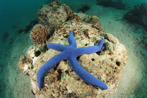 Deep-Sea-World on #Daysoutwithkids