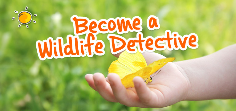 Become a wildlife detective on #Daysoutwithkids