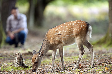 Deer on Brownsea Island on #Daysoutwithkids