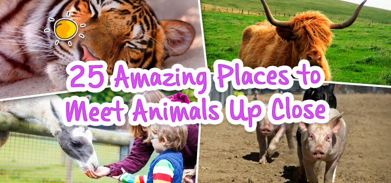 25 Amazing Places to Meet Animals Up Close