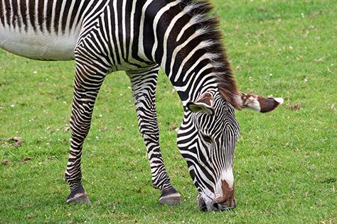 marwell-zoo
