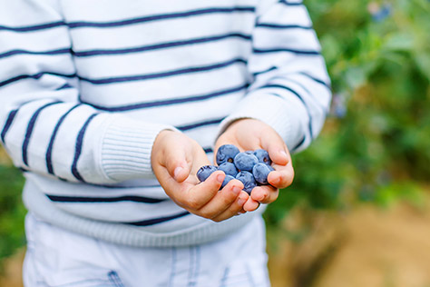 Blueberries---Ansty-Farm