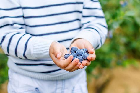 Blueberries---Ansty-Farm