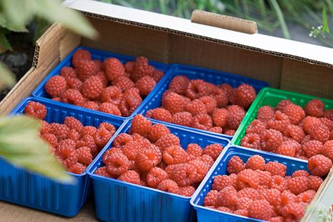 Brockbushes---Raspberries