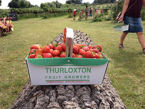 Thurloxton-Farm