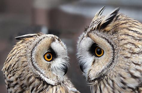 falconry-uk-birds-of-prey-centre