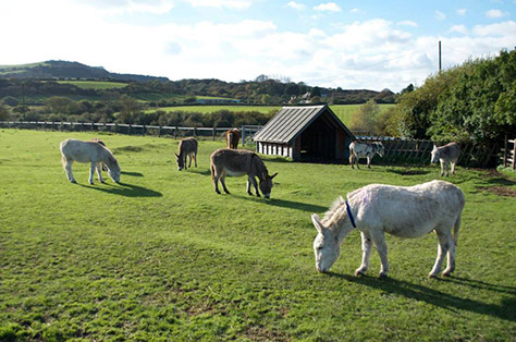 isle-of-wight-donkey-sanctuary