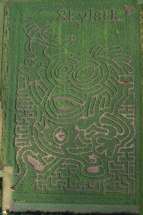 skylark-maize-maze
