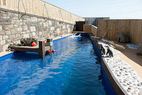 st-andrews-aquarium