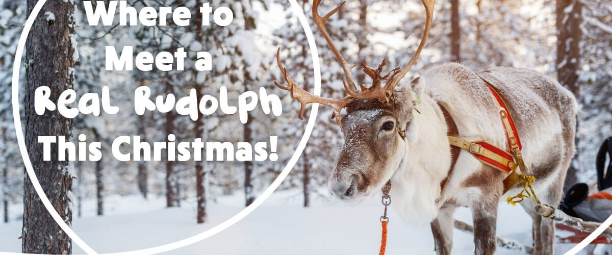 Where to Meet a Real Rudolph This Christmas!