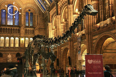 natural-history-museum-blog