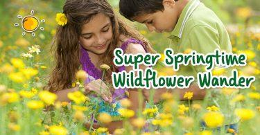 header-super spring time wildflower wander - Copy
