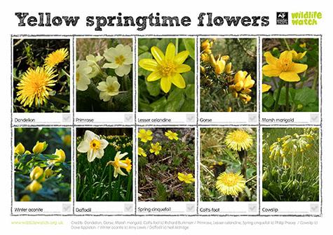 yellow springtime flowers