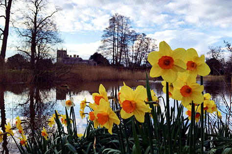 Coughton Court daffodils - © Abi Cole