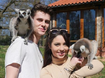 Lemurs and couple compressed