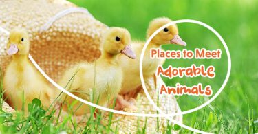 Places to Meet Adorable Animals