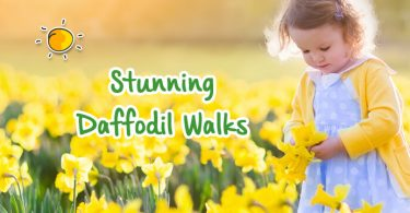 Stunning Daffodil Walks-header
