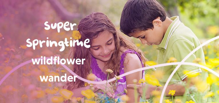Super Springtime wildflower wander