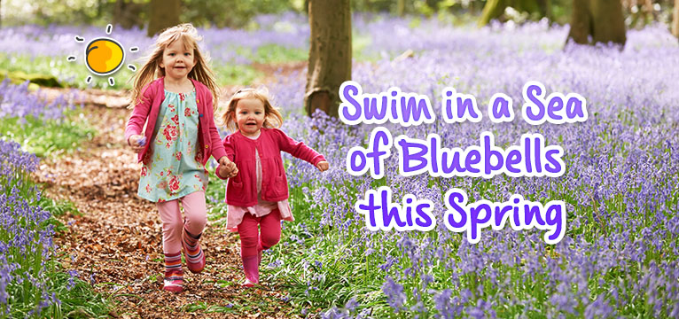 new header - swim in a sea of bluebell