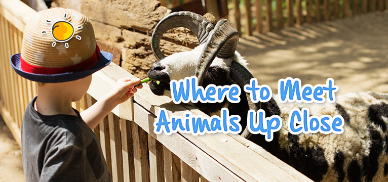new header - where to meet animals up close