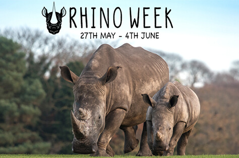 Rhino Week Small